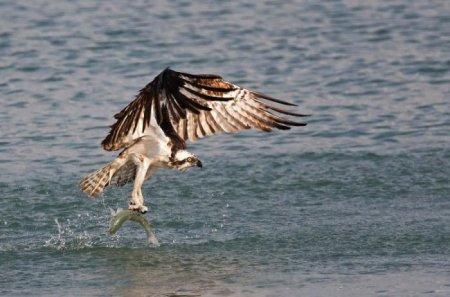 Лучшие снимки природы по версии The Palm Beach Post