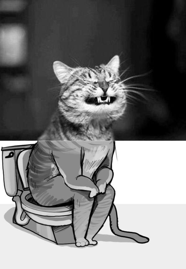 Смешные картинки я сру, вячеславу днюхой
