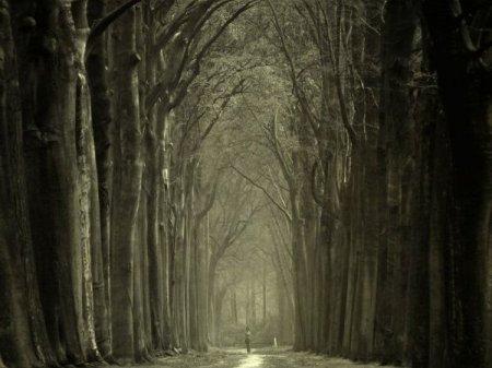 могучие деревья парка
