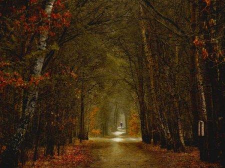 туннель из деревьев
