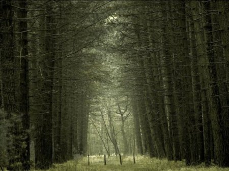 тайны леса