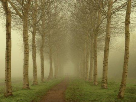 туманное утро в парке