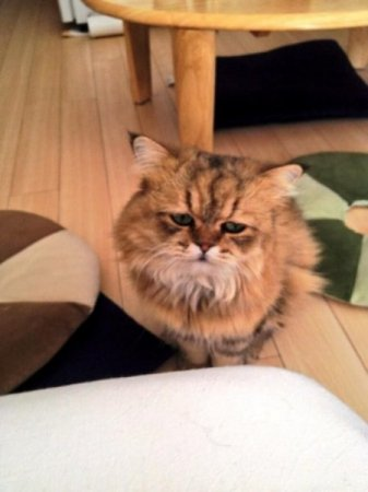 самый грустный кот
