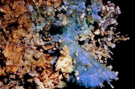 пещерные кораллы