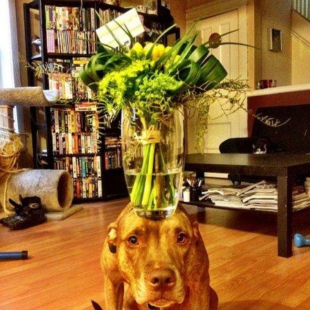 собака с вазой на голове