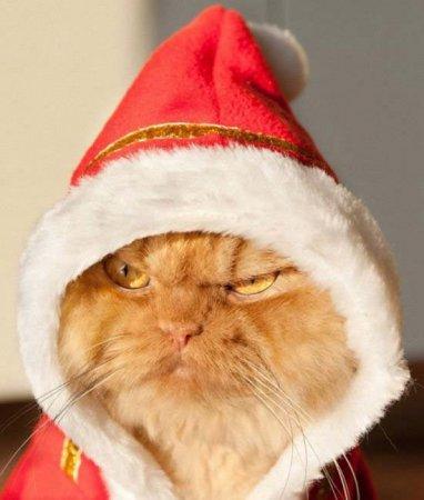 Хмурый Дед Мороз