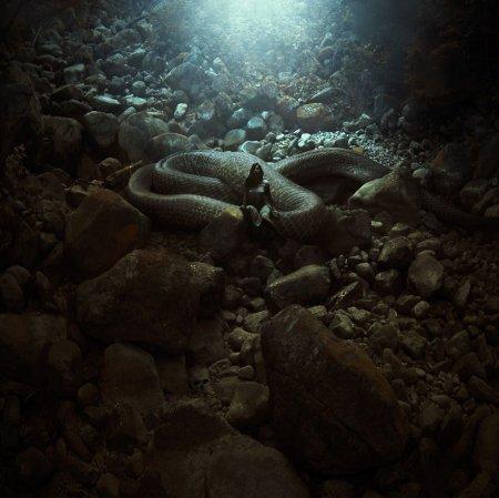 сытая змея
