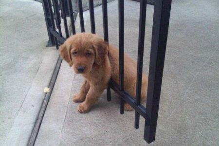 щенок в воротах