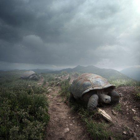 черепаха с кинжалом