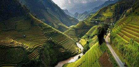 зеленый поля