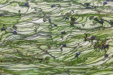 зеленые волны