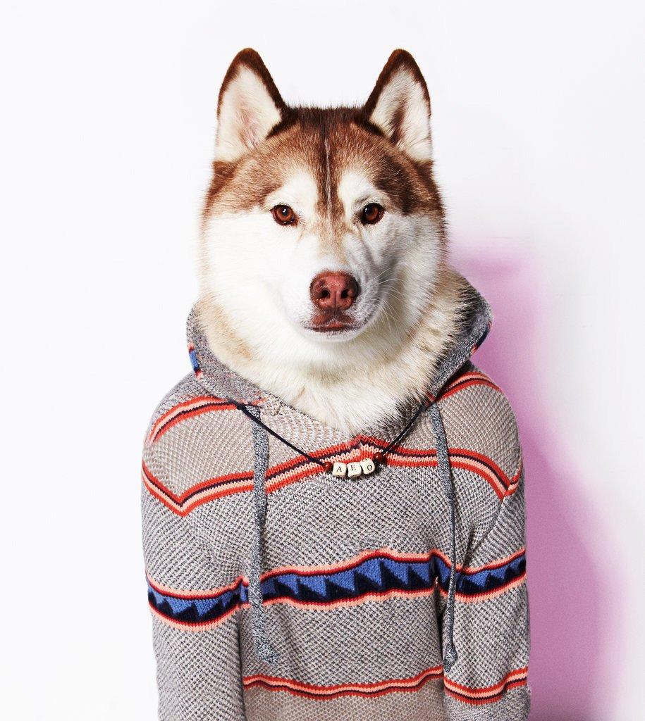 Одежда Для Хаски