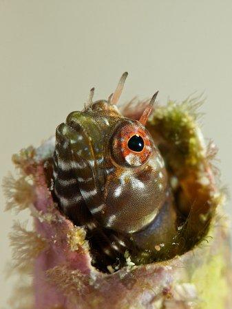 рыба из ракушки