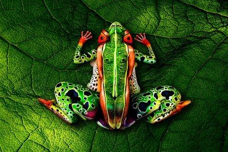 цветная лягушка