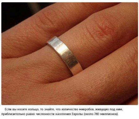 микробы под кольцом