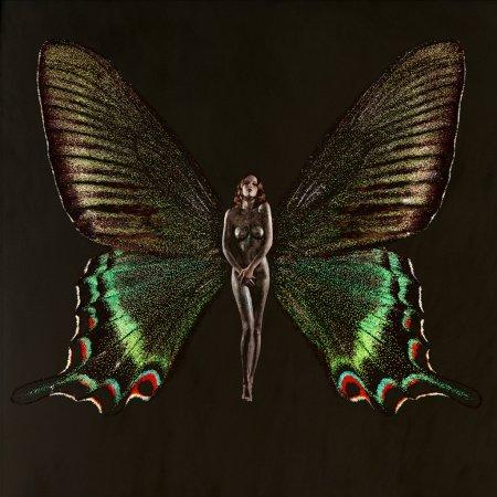блестящая бабочка
