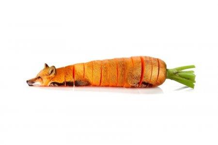 лиса морковка