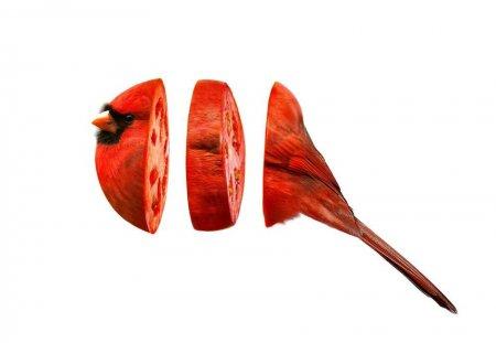 птица помидор