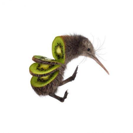 киви - фрукт и птица