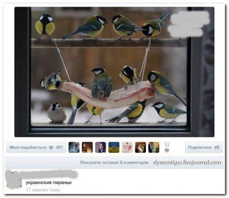 Перлы из соцсетей