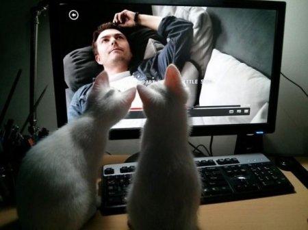 продвинутые коты