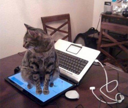 не сиди на клавиатуре