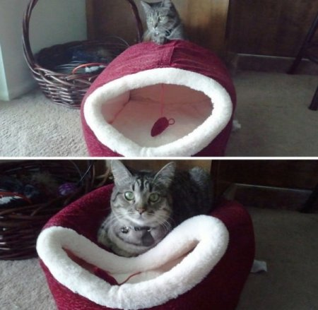 кошки и их логика