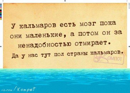 у кальмаров