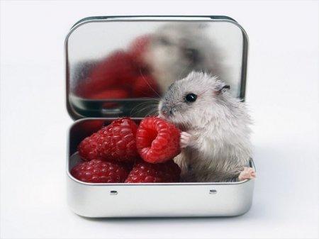 мышка в малинке