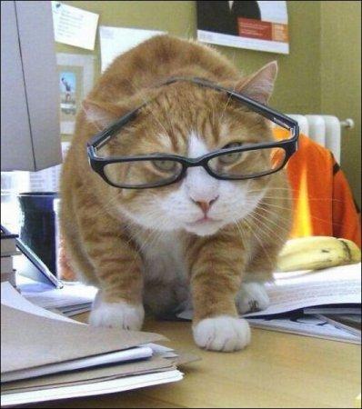 деловой кот