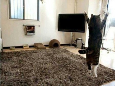 зарядка для кота