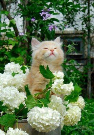 воодушевленный кот