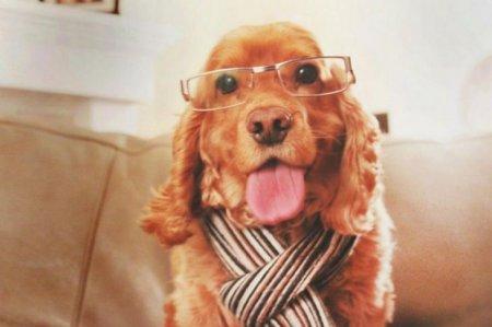 официальный пес