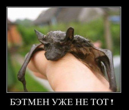 бэтмен не тот
