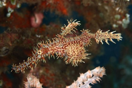 рыба водоросль