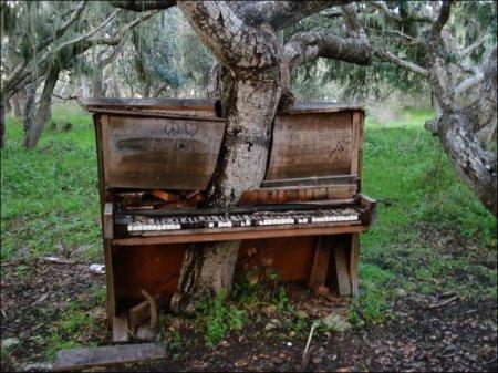 дерево в пианино