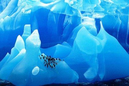 ледники и пингвин