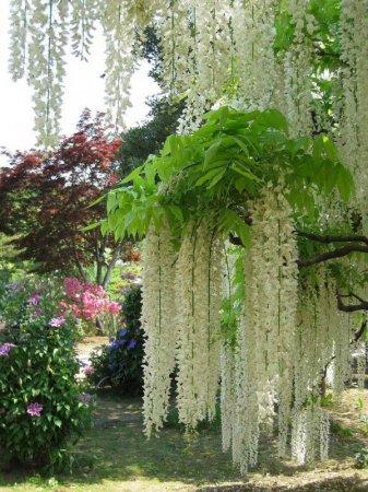 цветочные водопады