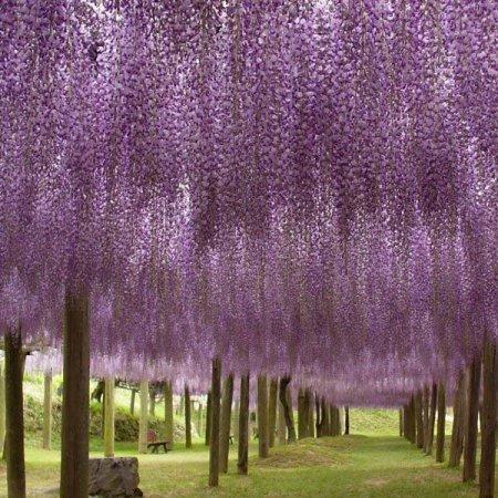 парк с цветущими деревьями