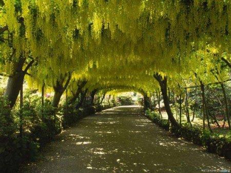 желтая цветочная арка