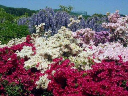 разноцветные сады