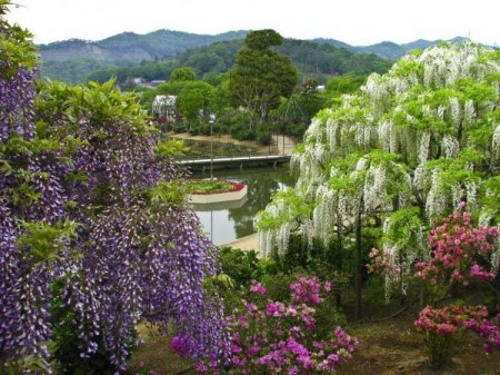 прекрасные сады