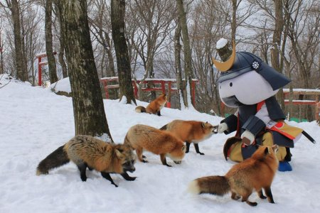 игривые лисички