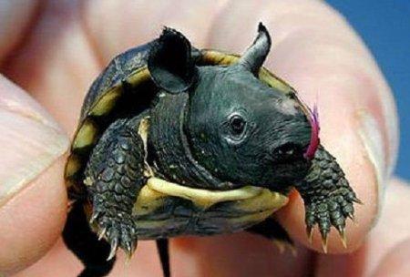 черепаха и бегемот