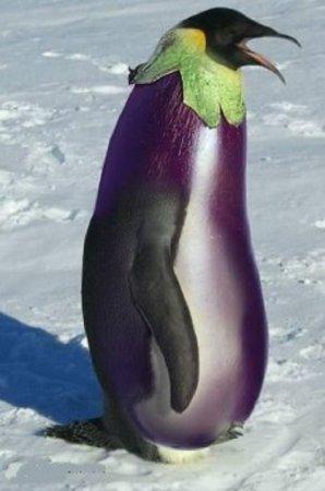 пингвин и баклажан