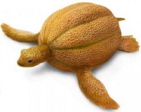 тыква и черепаха