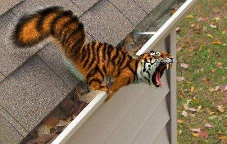 белка и тигр