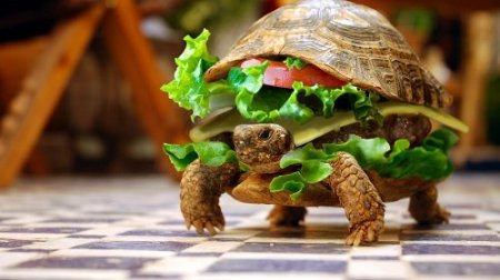 черепаха бургер