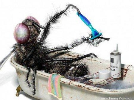 муха бреется