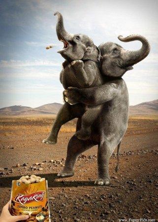 силач слон